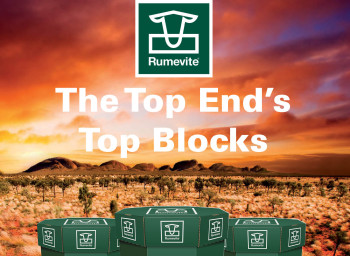 The Top End's Top Blocks